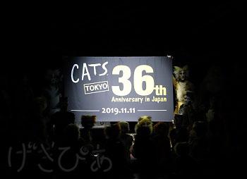 cats36th-05_8430.JPG
