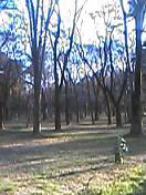 pdx06.jpg